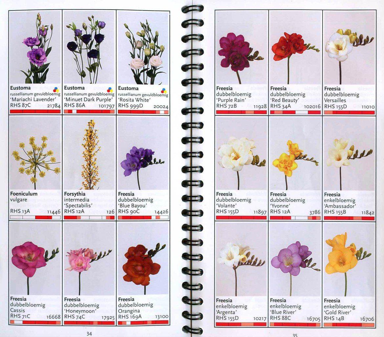 Каталог цветов флориста