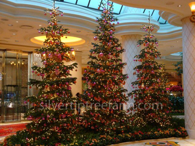 Wynn las vegas display of silvertip fir christmas trees for Wynn hotel decor