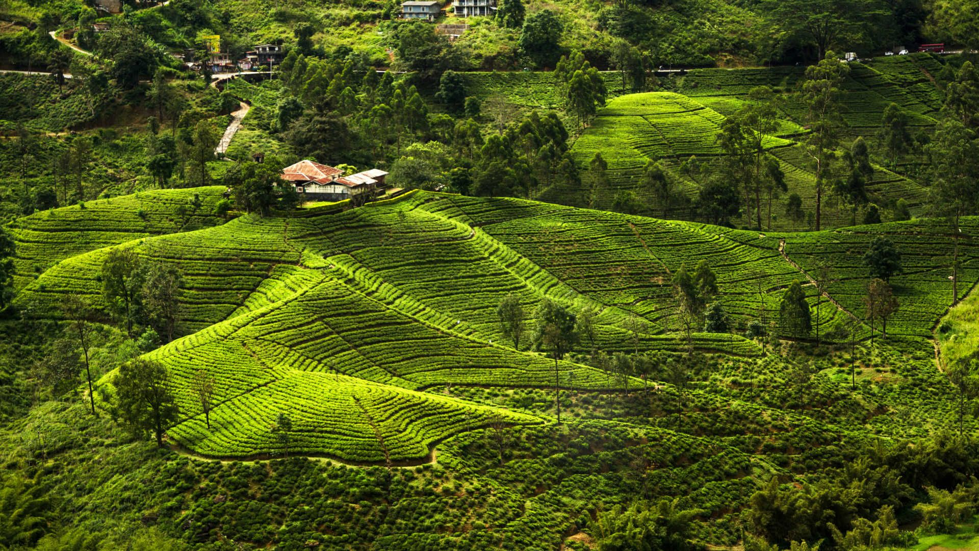 Nuwara Eliya Is A City In The Tea Country Hills Of Central Sri Lanka The Naturally Landscaped Hakgala Botanical Garden Sri Lanka Travel Usa Buddhist Countries