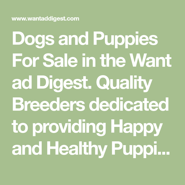 Dogs And Puppies For Sale In The Want Ad Digest Quality Breeders Dedicated To Providing Happy And Healthy Puppies T Puppies For Sale Puppies Bernedoodle Puppy