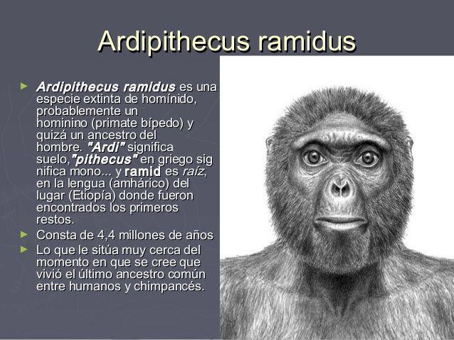 Resultado de imagen de El Ardipithecus Ramidus