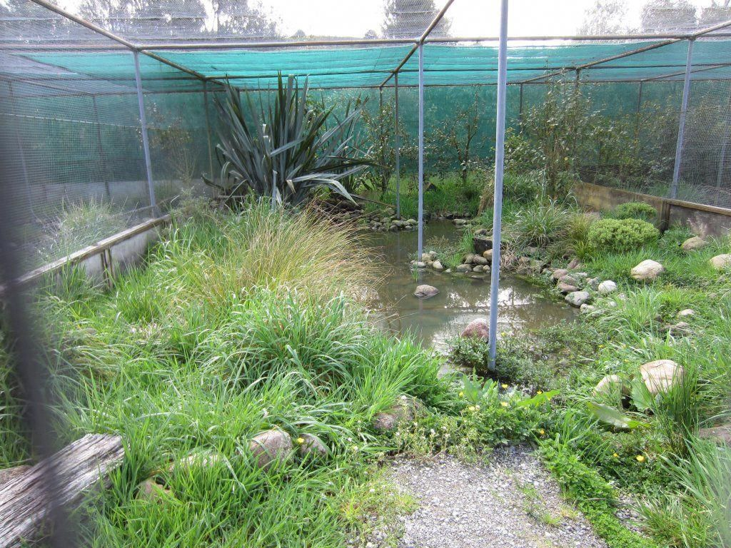 Things to Consider When Building an Aviary Aviary