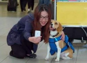 KLM Lost & Found Service Introduces Sherlock The Dog