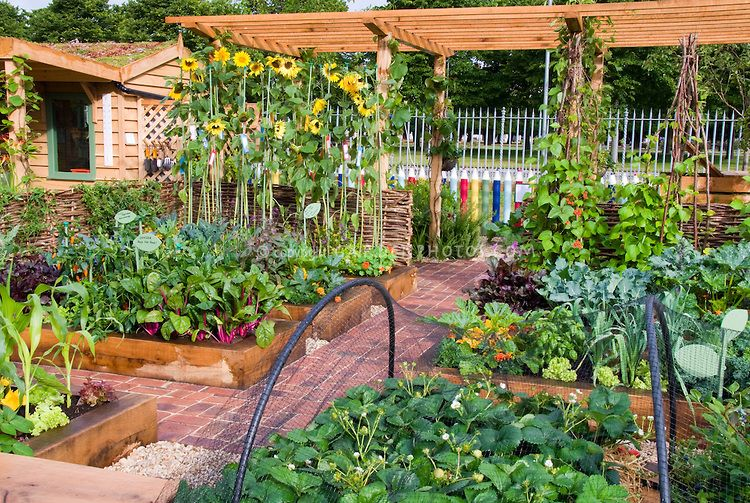 Raised bed vegetable garden with fruit strawberries, sunflowers ...