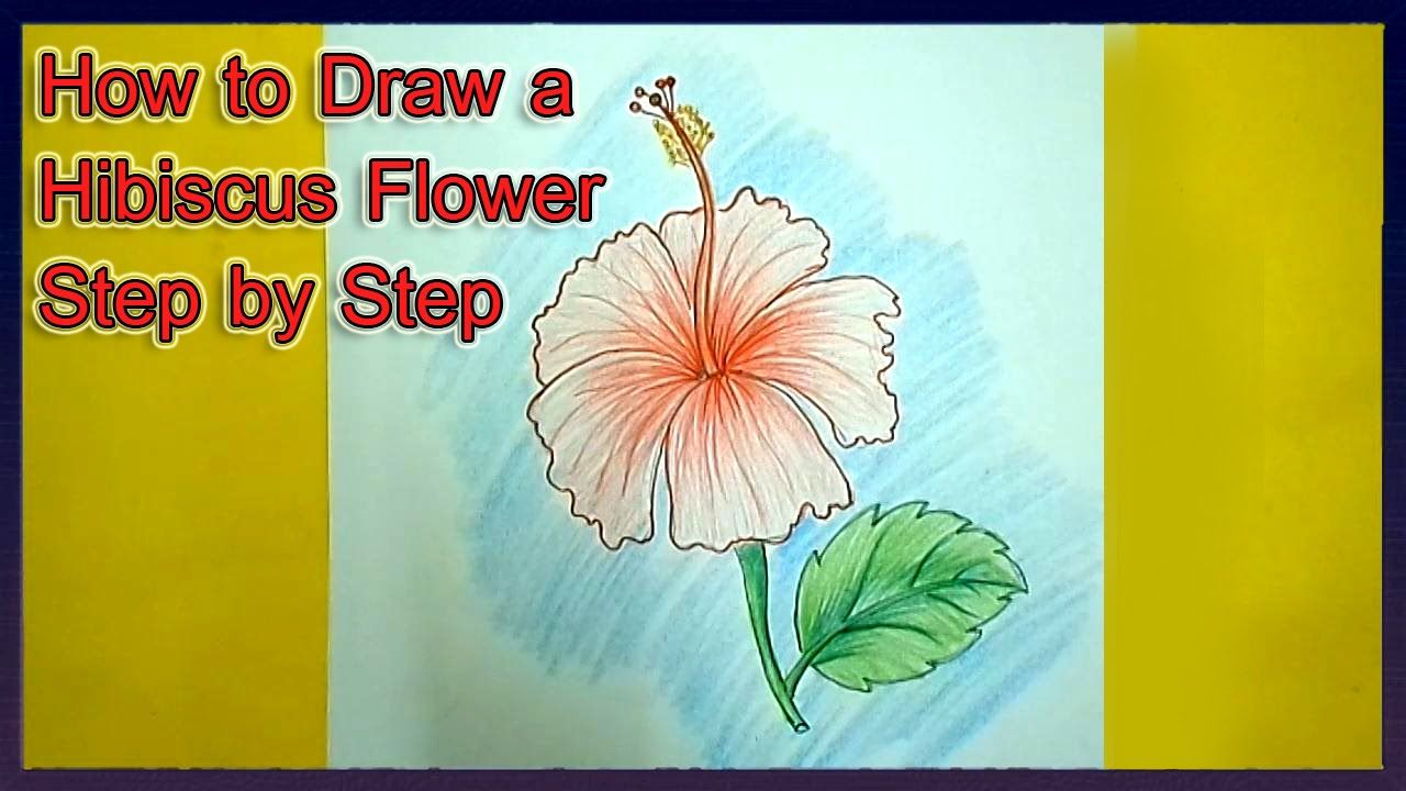 How To Draw A Hibiscus Flower Step By Step How To Draw Flowers