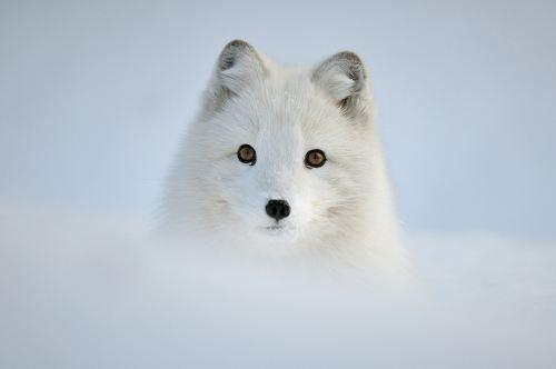 Animals looking adorable in the snow (23photos) - animals-snow-3