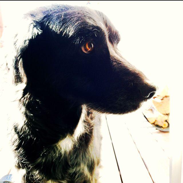 Puppy dog eyes always win