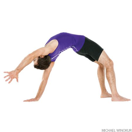 wild thing  iyengar yoga yoga poses yoga anatomy