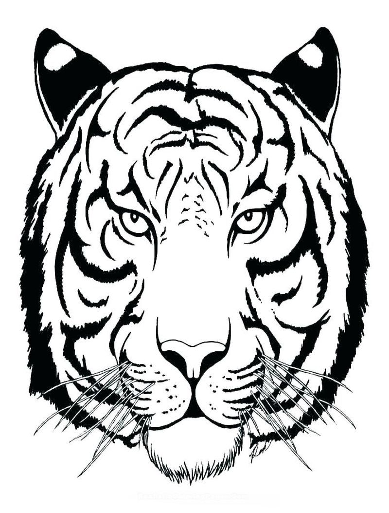 Cute Tiger Coloring Pages Here Is A Coloring Page Of A Tiger In
