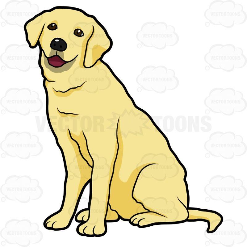 Side View Of A Yellow Labrador Sitting Labrador Retriever