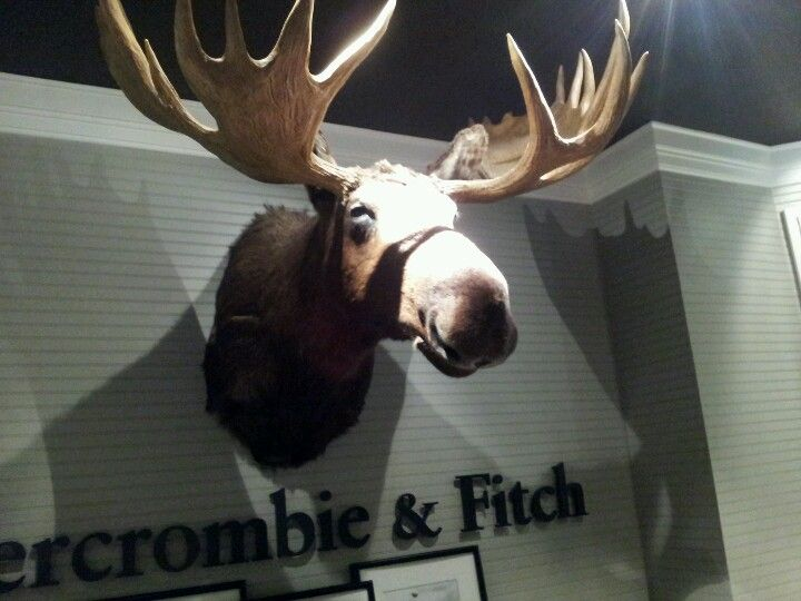 Abercrombie Moose Head