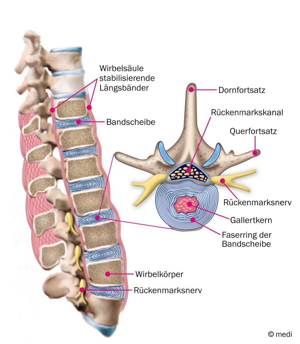 Passend zum Tag der Rückengesundheit ist heute der Rücken und die ...