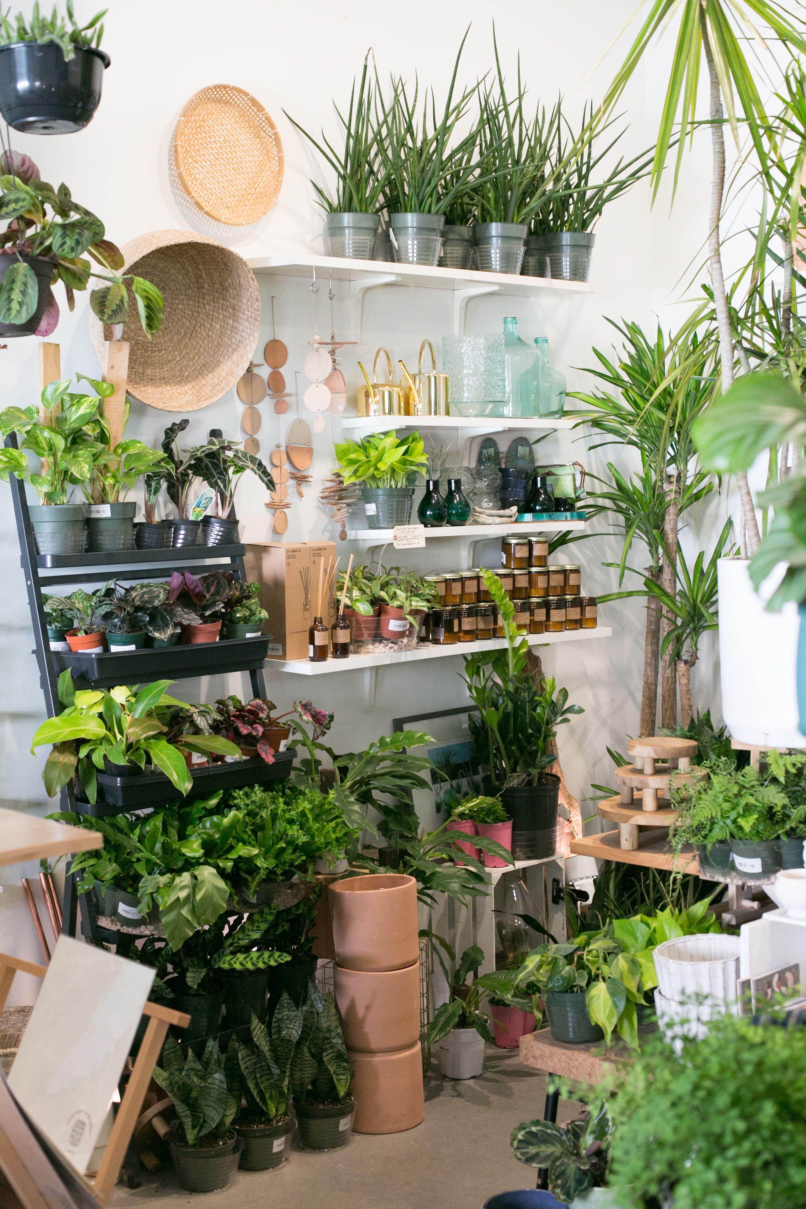 The Zen Succulent Plant Shop Room With Plants Plants Plant