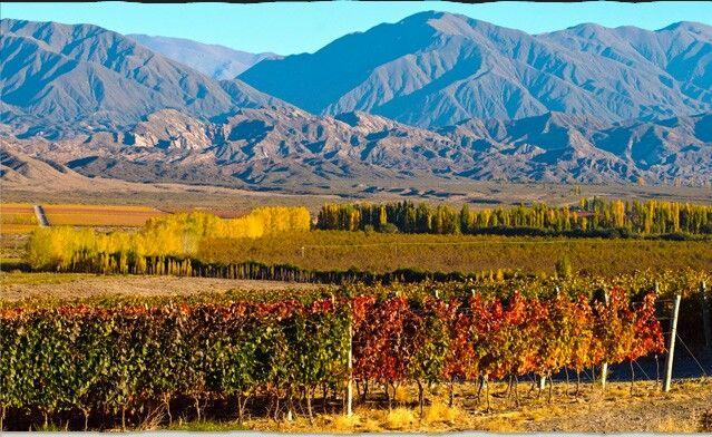 Ruta del Vino, Mendoza, Argentina | Paisajes, Ruta del vino, Argentina