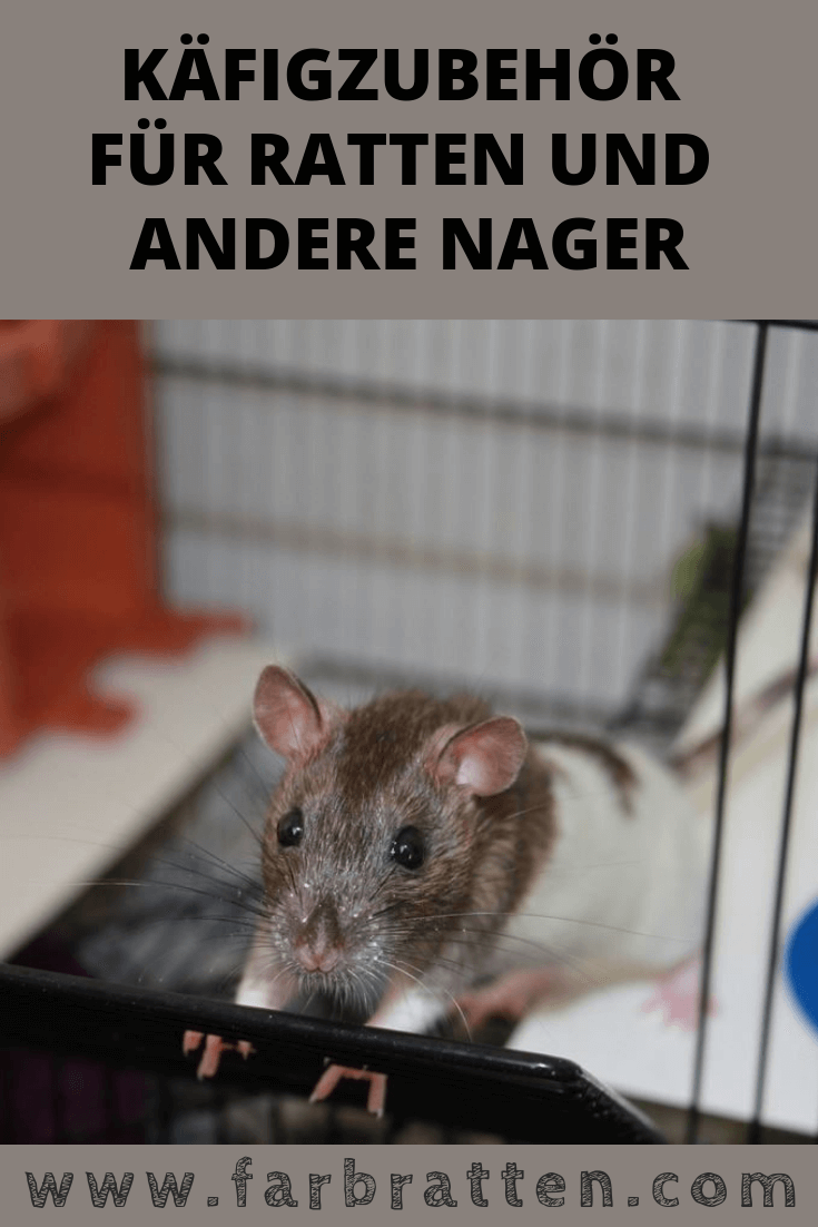 Kafigzubehor Fur Ratten Und Andere Nager Home Sweet Home Ratten Farbratten Haustiere