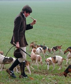 Eton College Beagles