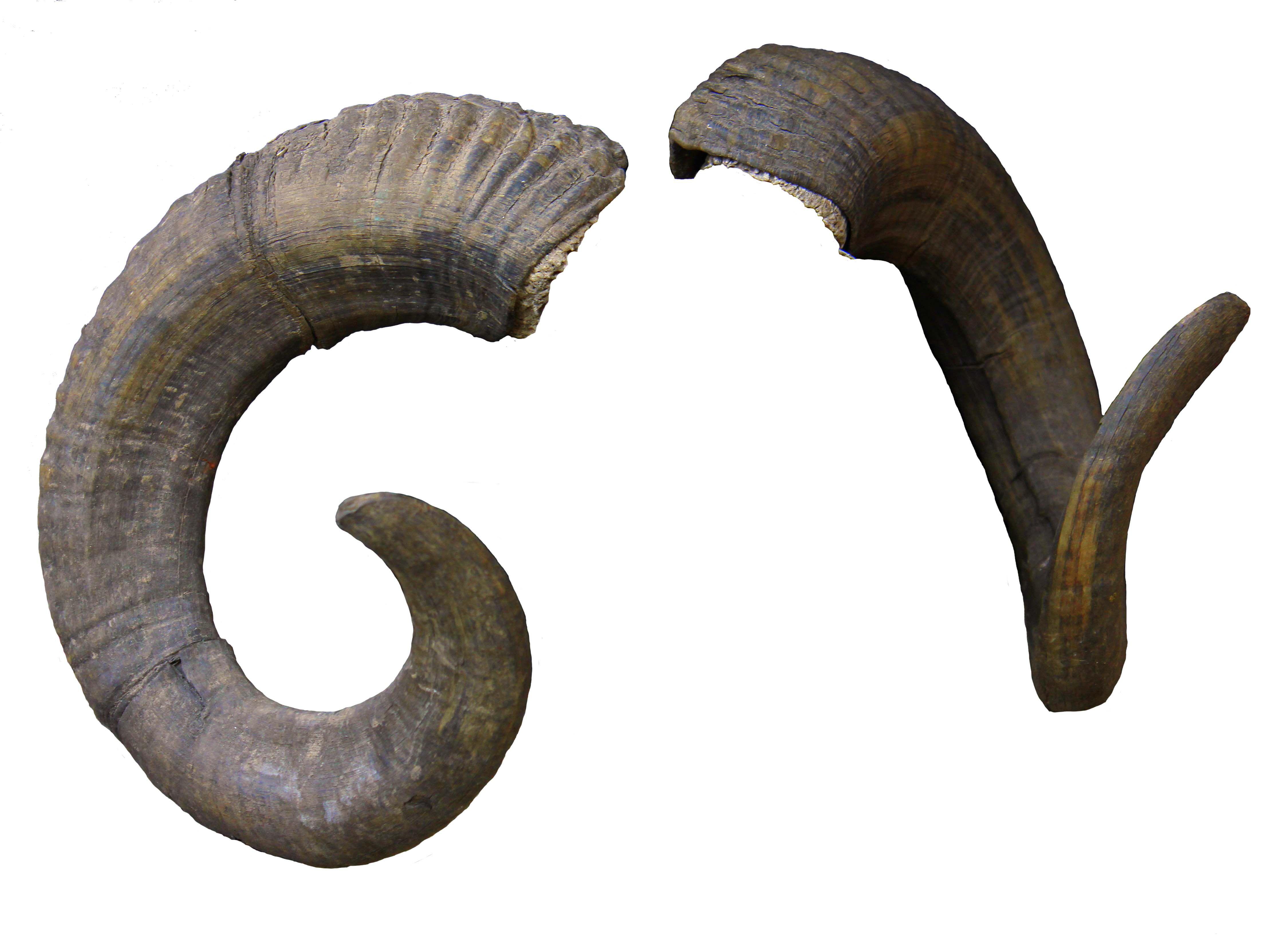 horns - Buscar con Google | Cuernos | Pinterest | Horn and ... Horns