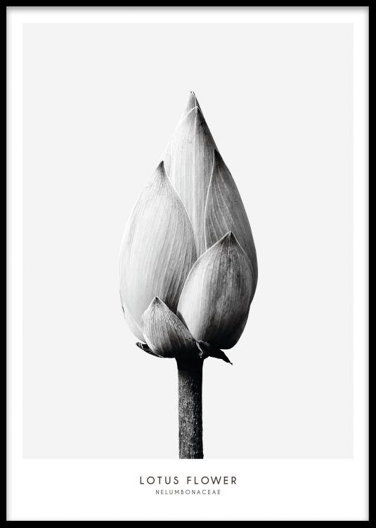 Kasviaiheinen juliste minimalistisessa sisustuksessa