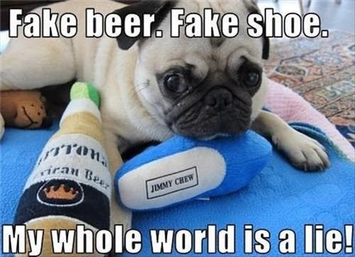 Pin By Animal Hub On Meme Rhymes With Creem Cute Funny Animals Funny Animals Funny Animal Jokes