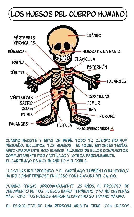 Fichas sobre el cuerpo humano para ni os buscar con for Medidas ergonomicas del cuerpo humano
