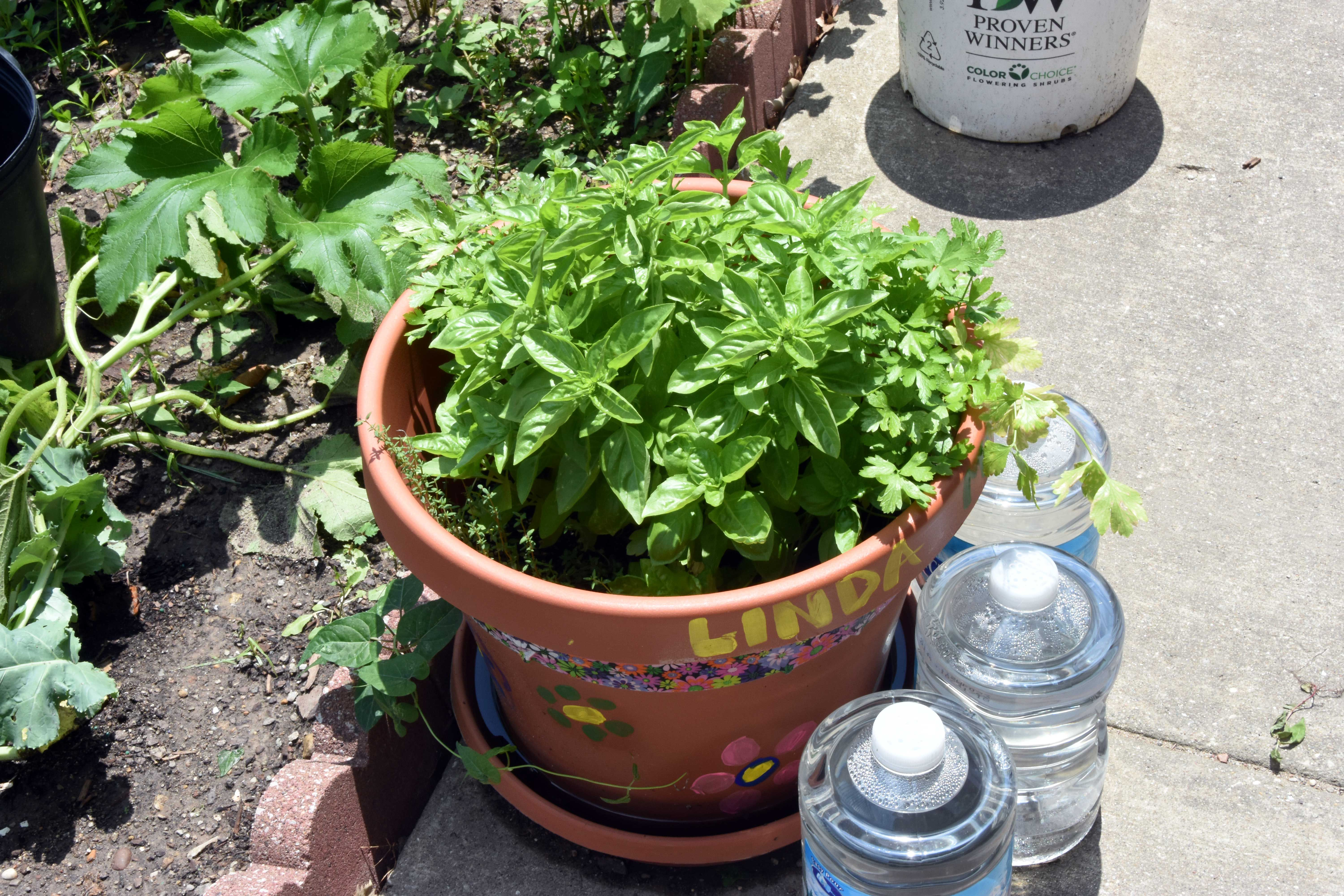 Check Out The Growing Garden At Eskenazi Health Center Barton Annex! The  Residents There Decorated