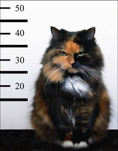 It is ALWAYS the calico's fault.
