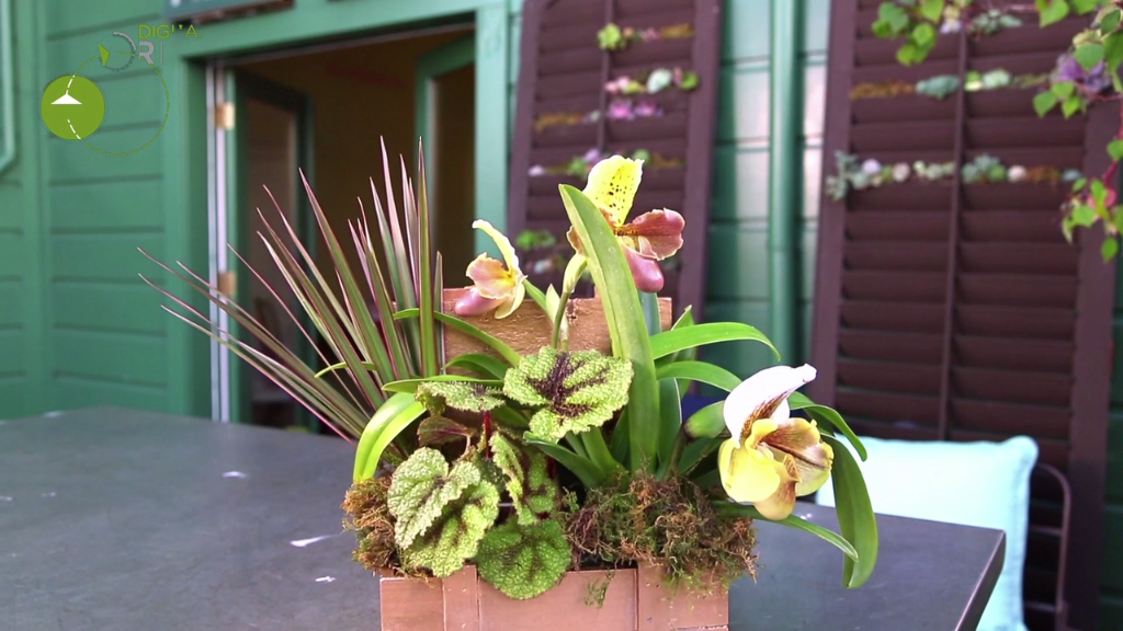 How To Create An Orchid Centerpiece Hgtv Videos Orchid