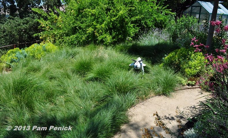 Berkeley Sedge Subs For Lawn In This Beautiful, Hilltop With A View CA  Garden.