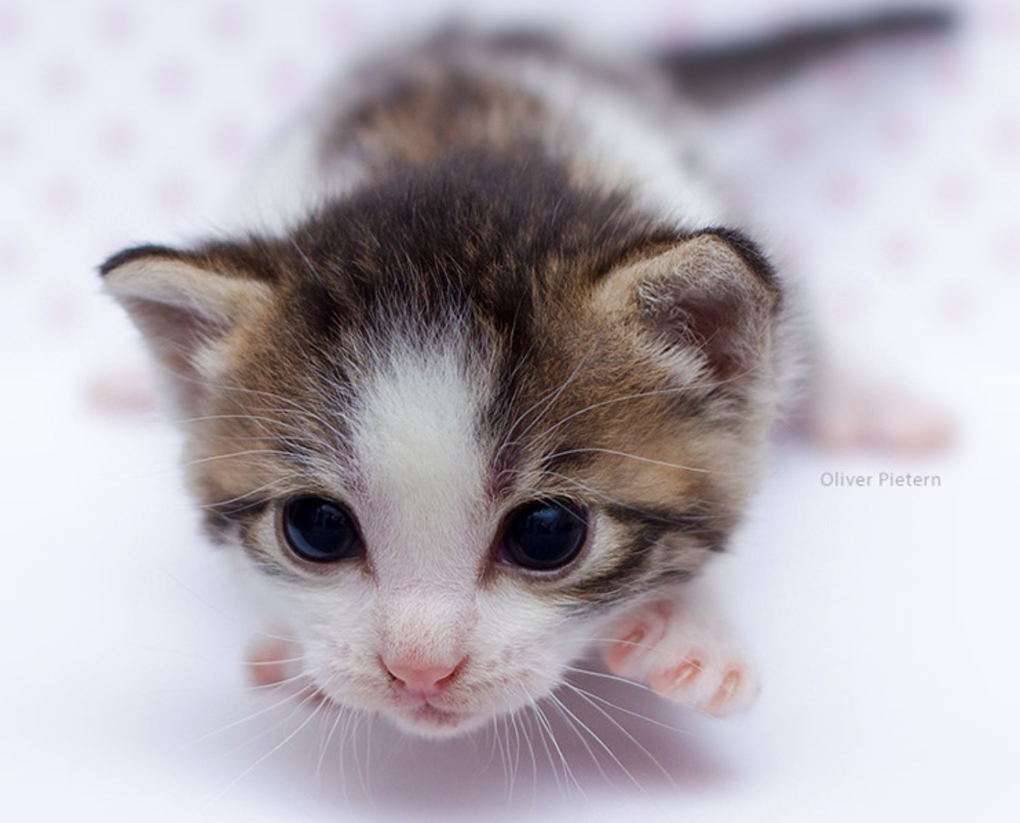 "Newborn kitten., It doesn't quite look like a ""Newborn"
