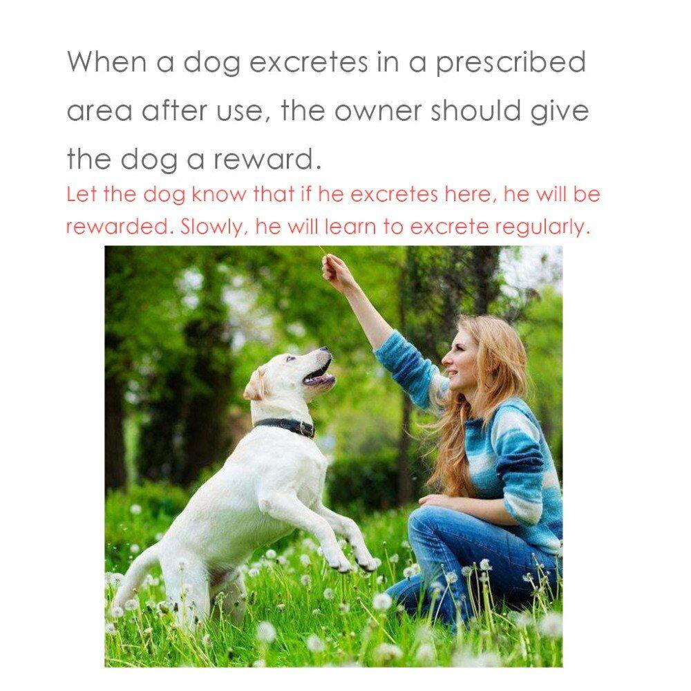 Dog Potty Training Spray 30ml Effective Pet Toilet Training Spray Dog Props Inducer Z0510 G30 In 2020 Dog Potty Indoor Dog Potty Puppy Training