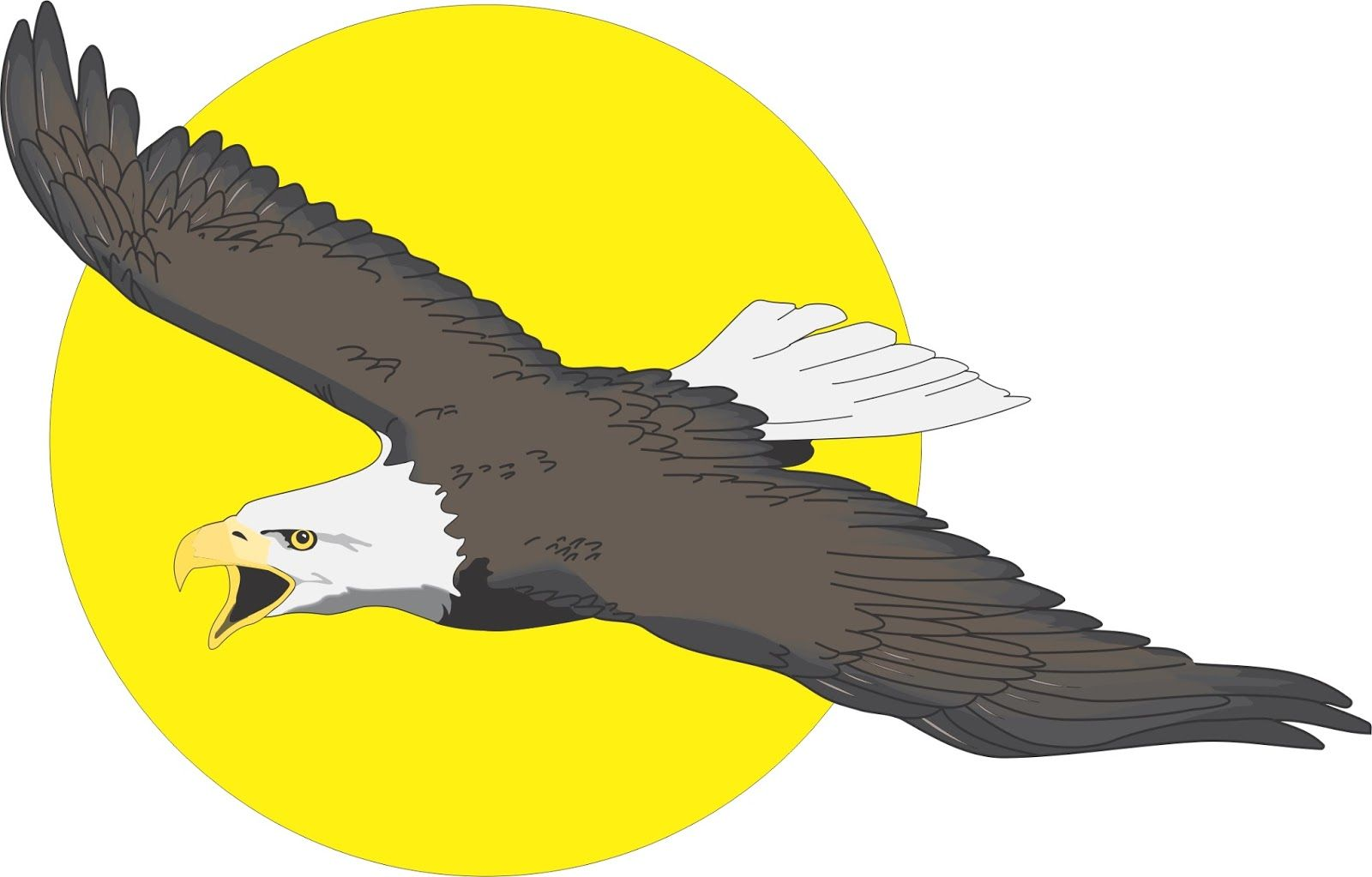 Unduh 75  Gambar Burung Rajawali Hd  Paling Unik