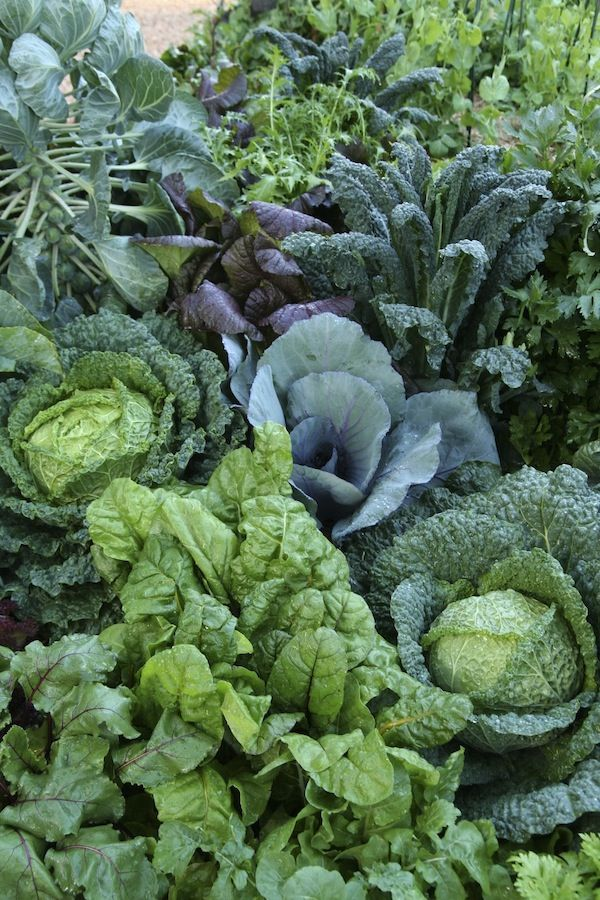 Best Shade Tolerant Vegetables And How Much Light They 400 x 300