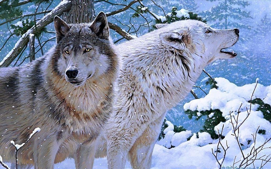 Волки в заснеженных горах, картины раскраски по номерам ...