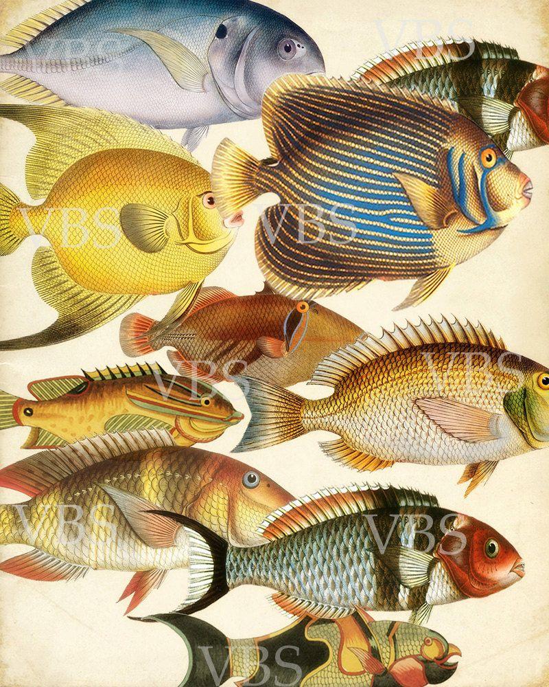 Vintage Fish Art Print - Les Poissons Natural History Collage Wall ...