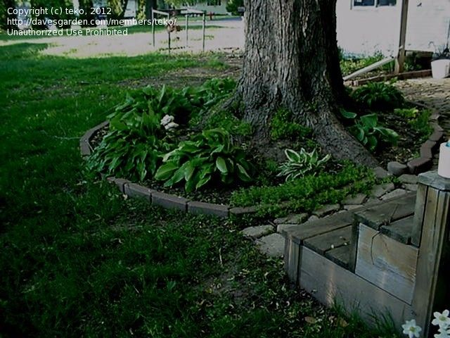 Landscaping Around Trees With Big Roots : Landscaping around trees ideas backyard outdoor