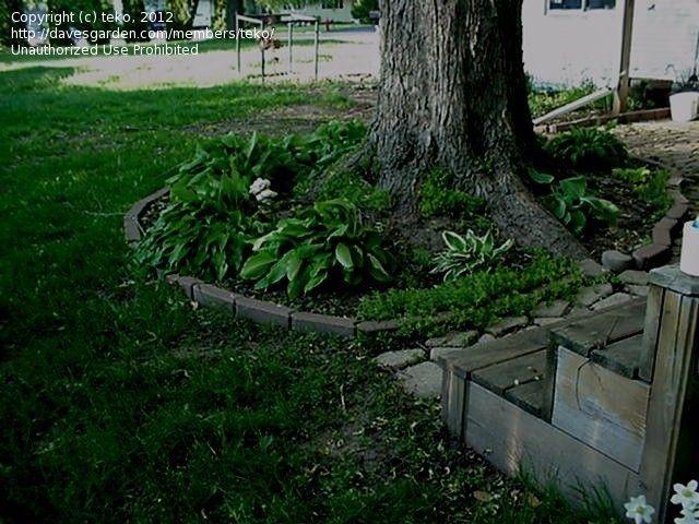 Pin By Jesika Land On Outdoors Landscaping Around Trees Backyard Landscaping Backyard