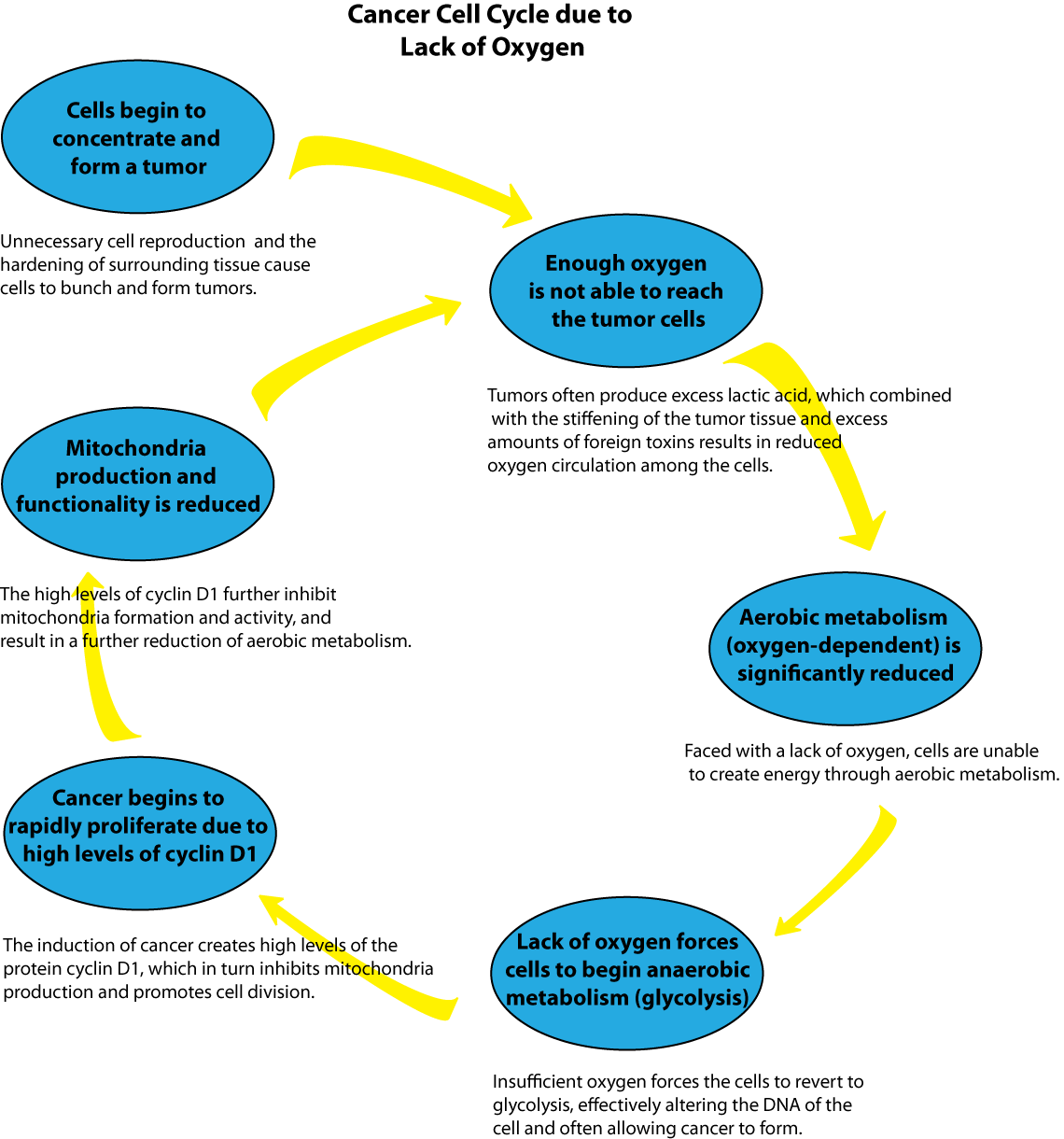 Oxygen cycle project 8 cell cycle pinterest oxygen cycle nvjuhfo Image collections