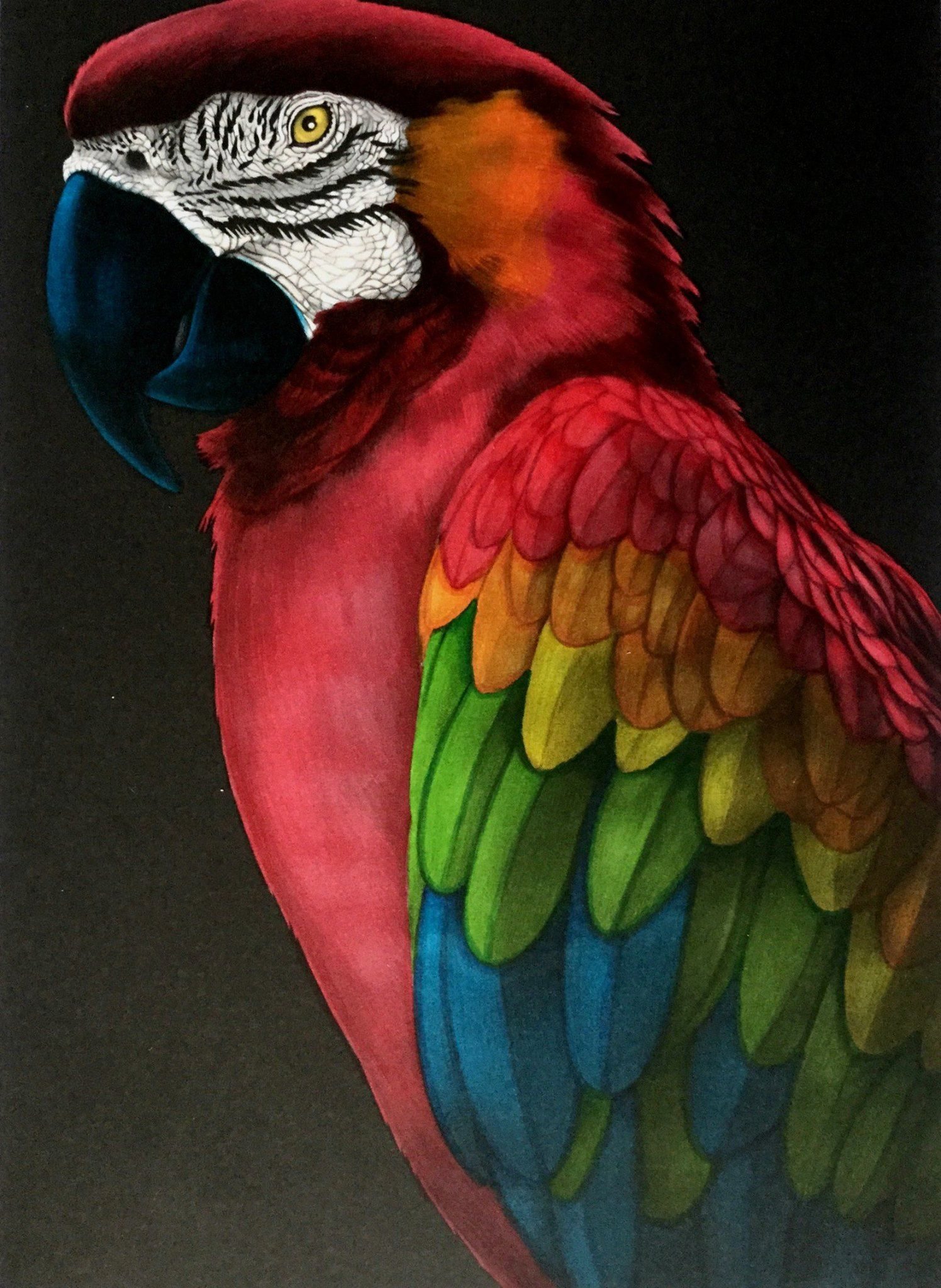 Macaw 2 by Benji Jager | Aves hermosas | Pinterest | Loros, Ave y ...