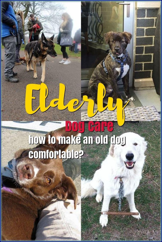 The Best Options For Elderly Dog Care Elderly Dogs Elderly Dog