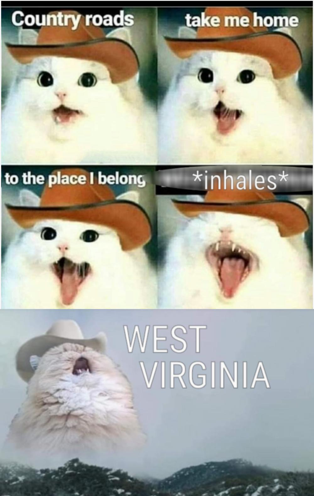Cowboy Cat Funny Animal Jokes Funny Cat Memes Funny Animal Memes