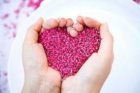 o amor é semente de essência divina, cultive sua semente e agradeça pelos frutos que colherás***