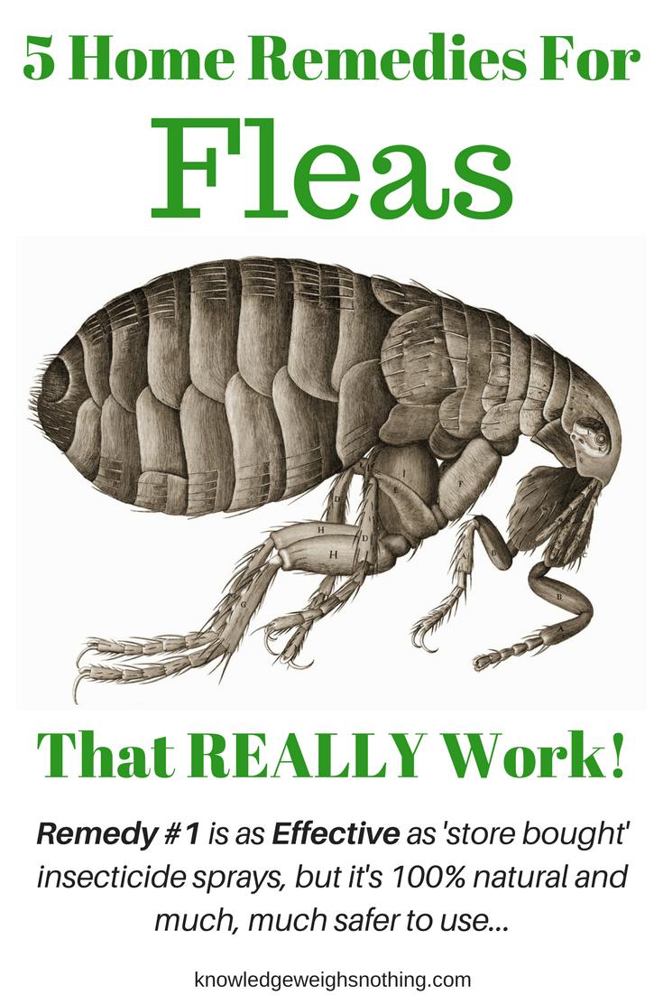 Flea Home Remedies A Flea Trap That Really Work Updated Home Remedies For Fleas Flea Remedies Dog Remedies