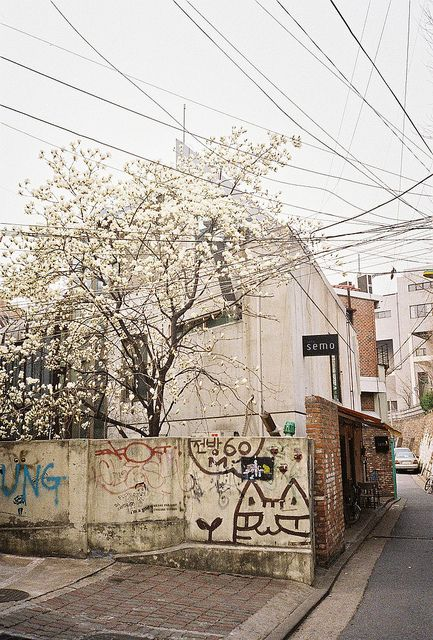 spring blossoms and some great graffity!