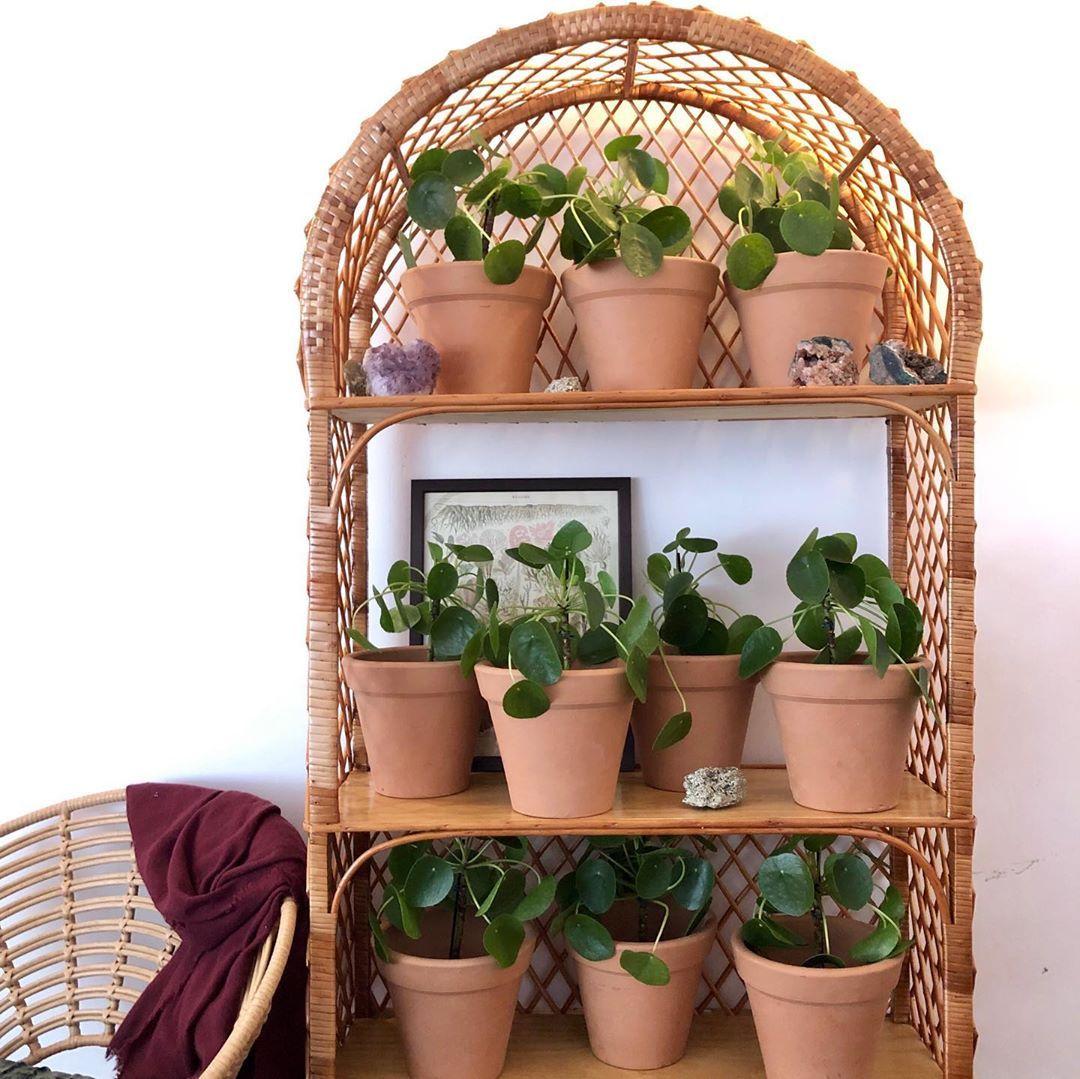 Plants Terracotta Pots Plant