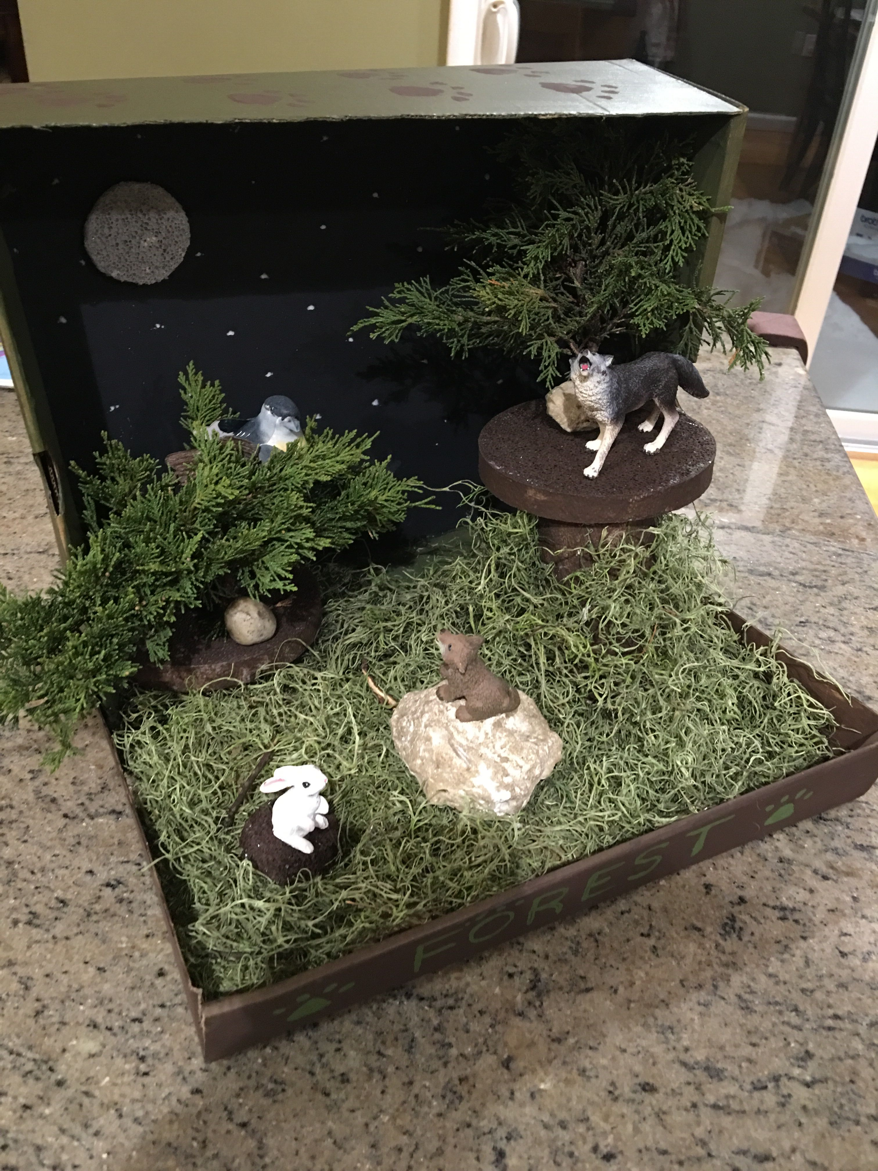 Kids Diorama With Details: Lobos, Maquetas, Proyectos