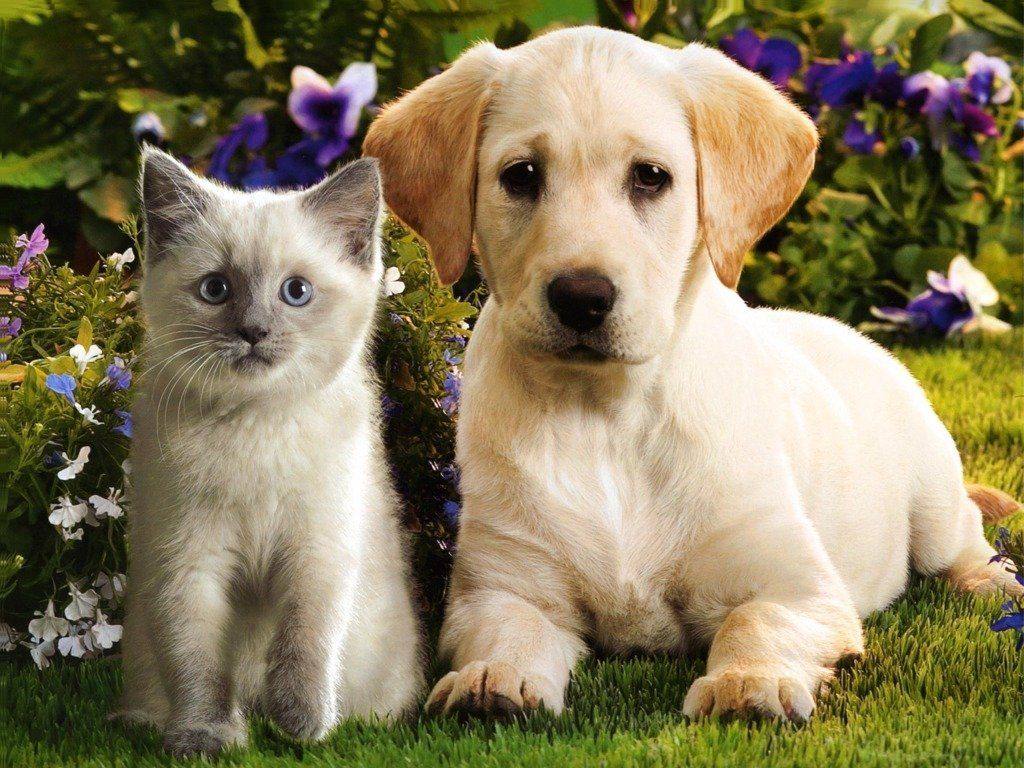 Kittens And Puppies Puppies Kittens And Puppies Cute Animals