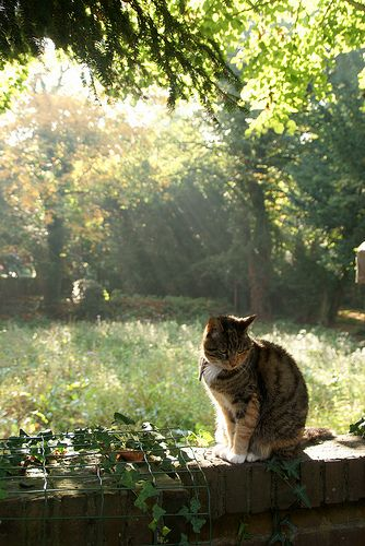our old fat cat sitting on our garden wall in utrecht the netherlands