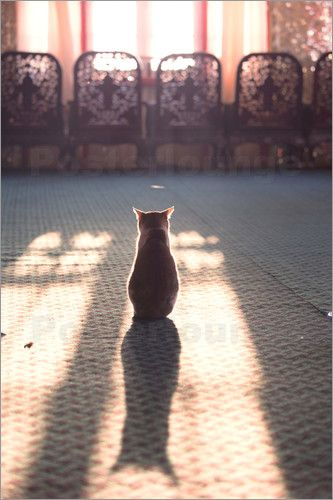 poster cat sitting in front of window with beautiful light von matteo colombo kitten photography