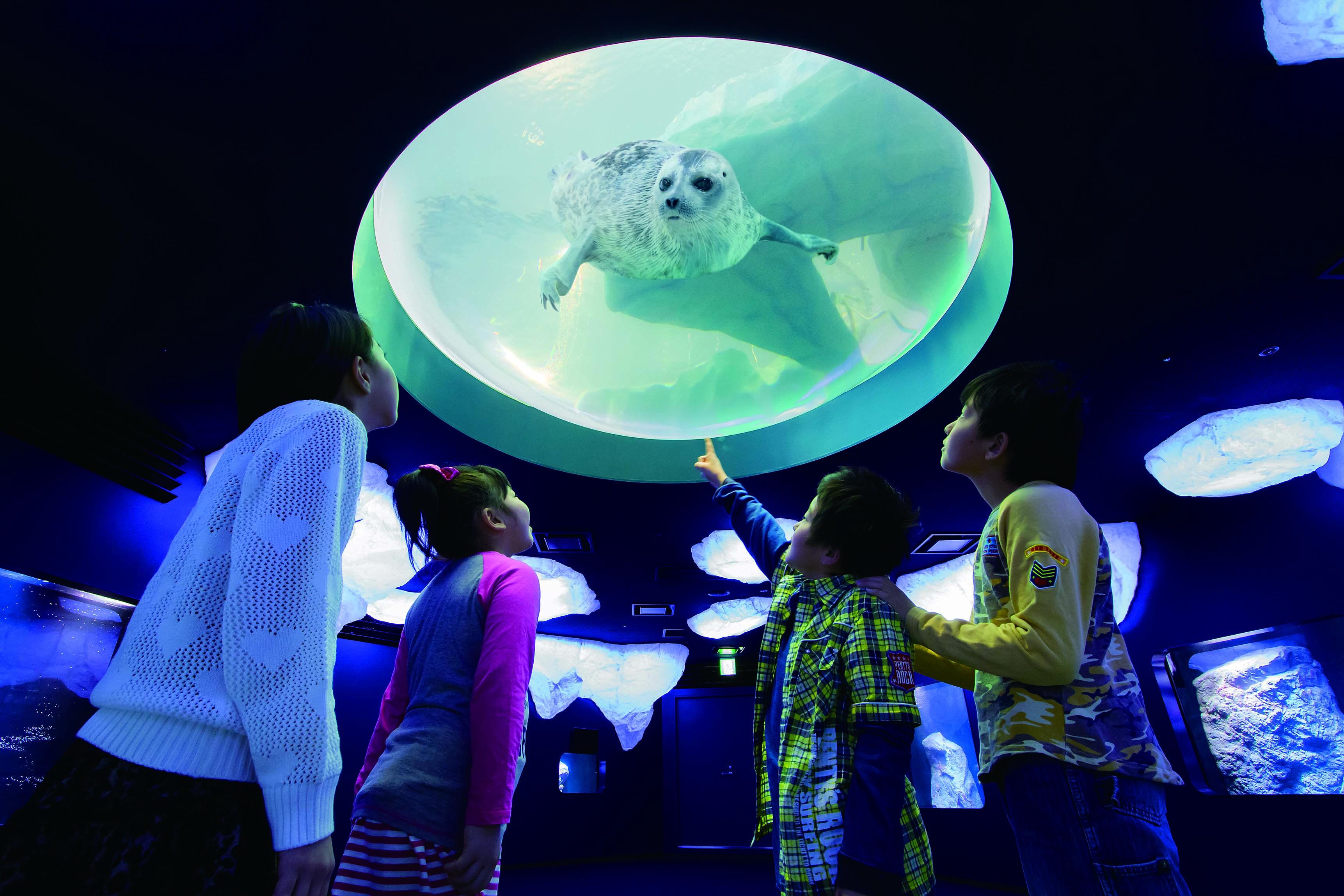 Frais De Aquarium Osaka Concept Idées de table