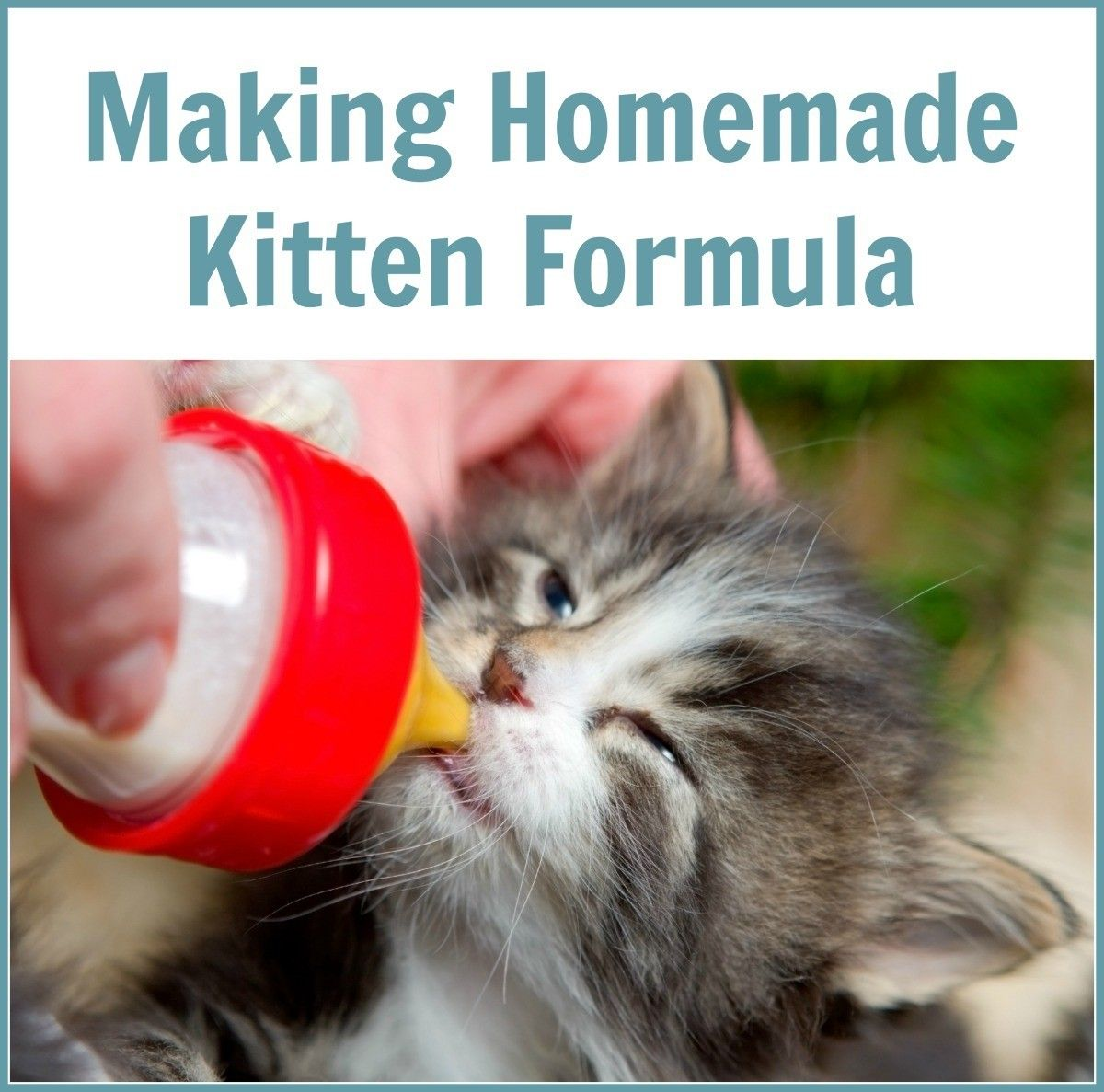 Making Homemade Kitten Formula Kitten Formula Kitten Formula Recipe Feeding Kittens